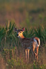 Kissimmee Prairie Preserve -- Wildlife/People :